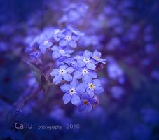 Forget Me Not R by Callu