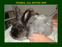 Tribble, All Better Now by dragonpyper