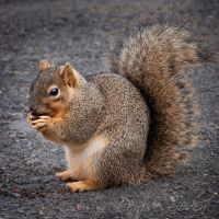 Squirrel by DeniseSoden