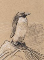 sketching: small Penguin by Velouriah