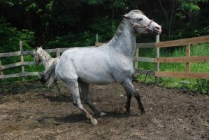 Appaloosa 56 by Spotstock
