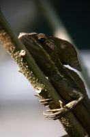 Basalisk Lizard II by lynsea