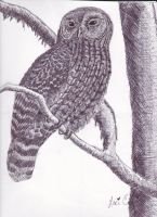 Crosshatched Owl by FlyingColors68