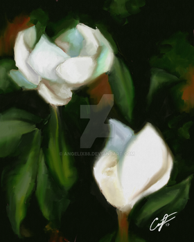 Magnolias 1 by Angelix88