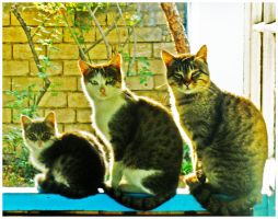 The Family by Samirs