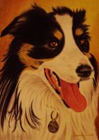 harley collie dog by shirls-art