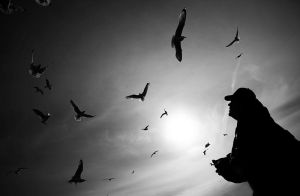 a flock of seagulls by ag90