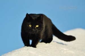 Cat in snow by Pebels