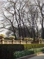 Classical Trees by chaimonkey