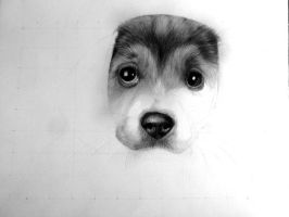 Pup W.I.P by happytrenty