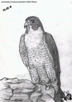 Falcon by White-Wolf-Redgrave