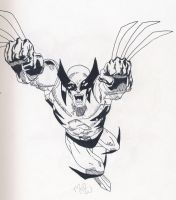 wolverine by CaperGirl