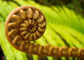 Spiral Fern by xavier88