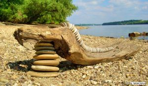Stones and driftwood in Hungary by Tamas Kanya by tom-tom1969