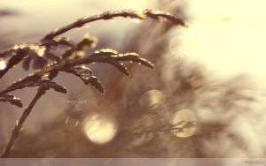 Morning Dew Drops Wallpaper by Clu-art