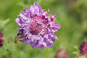 Bee and Flower by ChinookDesigns