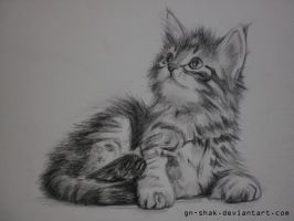 siberian kitten by GN-SHAK