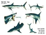 Shortfin Mako Shark - Sheet Kappa by Culpeo-Fox