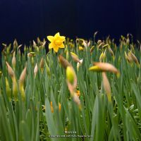 Narciso by too-much4you