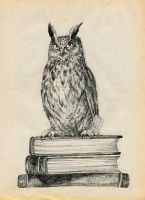 Library owl by Redilion