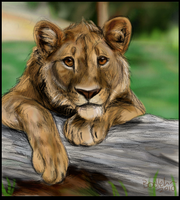 Realistic Simba by BooYeh