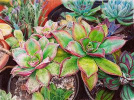 Succulents in color pencils by KingVahagn