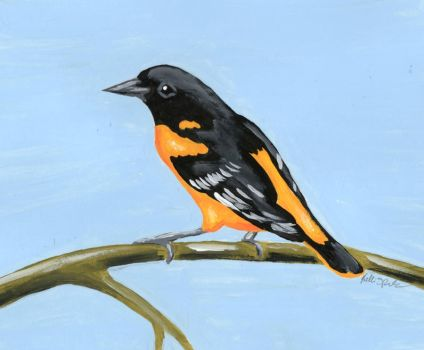 Oriole by GreenChikin