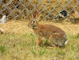Wild Rabbit by EndOfGreatness