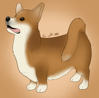 Pembroke Welsh Corgi by CollectionOfWhiskers