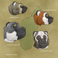 Palaeopropithecidae, the 'sloth lemurs' by WSnyder
