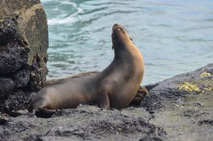 South Plaza - Sea Lion 1 by LLukeBE