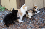 5 19 09 Kitten Conga by DeviantLadyAshley