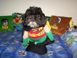 My puppy in his Robin costume by BrittyDee