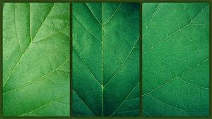 leaves by IolanthePhoto