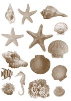 Photoshop Seashell Brushes by manu666tb