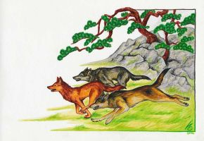 extinct japanese wolves by Nenu