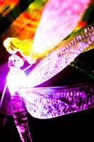 dragonfly lights by Paganpoetry17