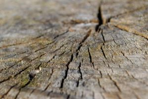 Sawed Off Tree Trunk by KameleonKlik