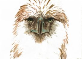 Philippine Eagle by solarisa