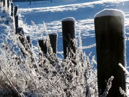 the snowy fence by Dieffi