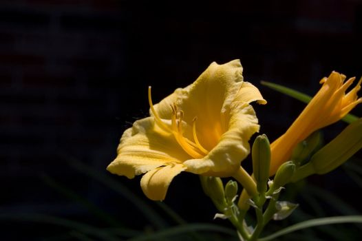 Yellow Flower by mobster1227