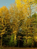 Autumn Trees by davepphotographer