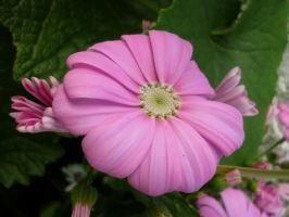 Pink Flowers Unres stock 03 by shelldevil