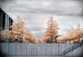 Berlin Center - Trees Government District infrared by MichiLauke