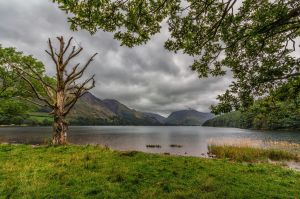 the dead tree at the end of the lake by lesterlester