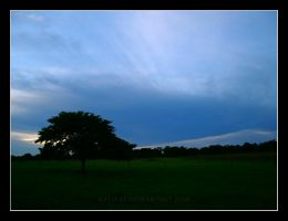 Tree and the sky by KatiaST