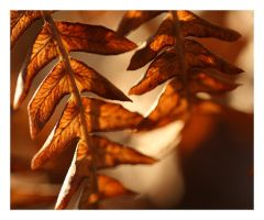 1511 - Remains of Fall by boxx2genetica