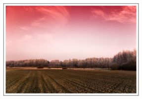 Pink Frost by Liquid82