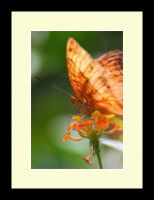 Butterfly Photo 58 by blookz