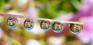 water drop reflection by lindahabiba